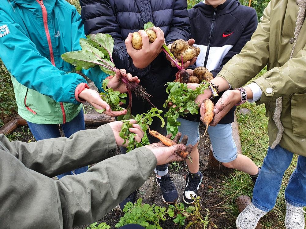 Eerste oogst op basisschool De Klokkenberg